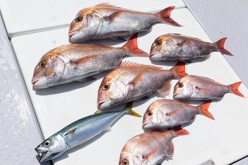 和歌山 遊漁船 釣果 タイ